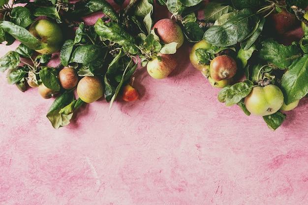 Pommes de jardin avec des feuilles sur fond rose Photo Premium