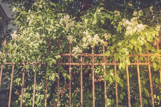 Pommier en fleurs derrière une clôture de fer rouillé. rétro tonique. Photo Premium