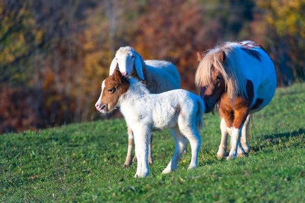 Un Poney Avec Le Petit Et Un Mouton Photo Premium
