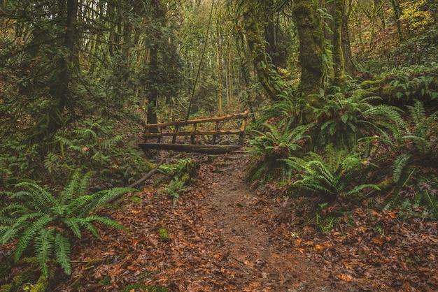 Pont En Bois Dans Une Forêt D'arbres Photo gratuit