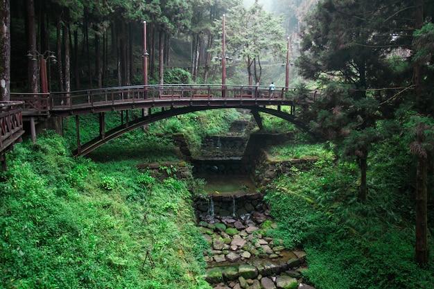 Le Pont De Bois En Forêt à Alishan, Taiwan Photo Premium