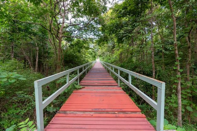 Pont à la forêt tropicale humide brumeuse. Photo Premium