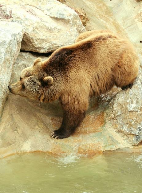 Porter au zoo Photo Premium