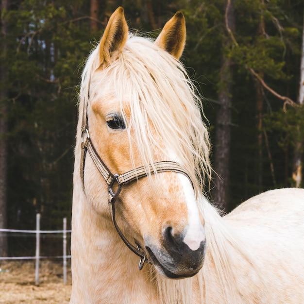Portrait de beau cheval Photo Premium
