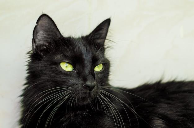 Portrait D'un Beau Jeune Chat Noir Aux Yeux Verts Photo Premium