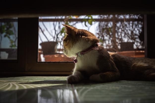 Portrait de chat domestique tigré au sol Photo Premium