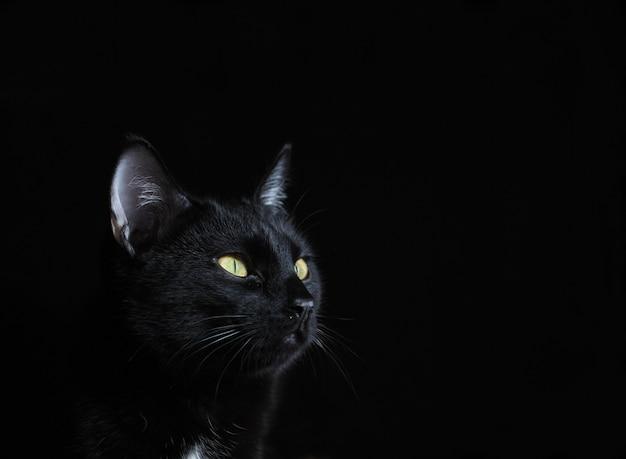 Portrait d'un chat noir aux yeux jaunes Photo Premium