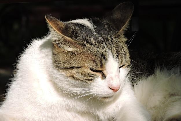 Portrait de chat de rue Photo Premium