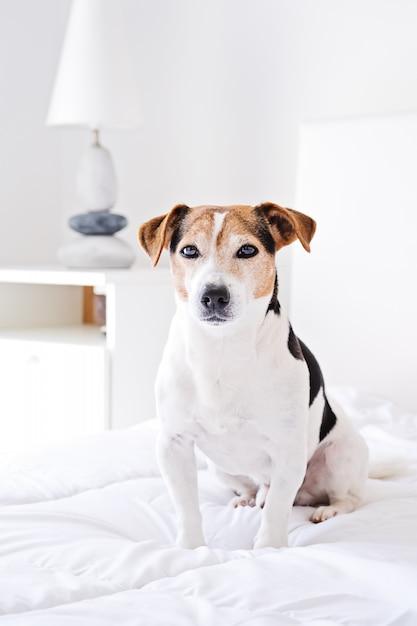 Portrait, de, chien mignon, emplacement, lit, et, regarder caméra, sur, blanc, couette Photo Premium