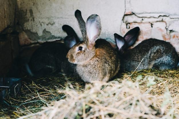 Portrait d'un lapin sur l'herbe Photo gratuit