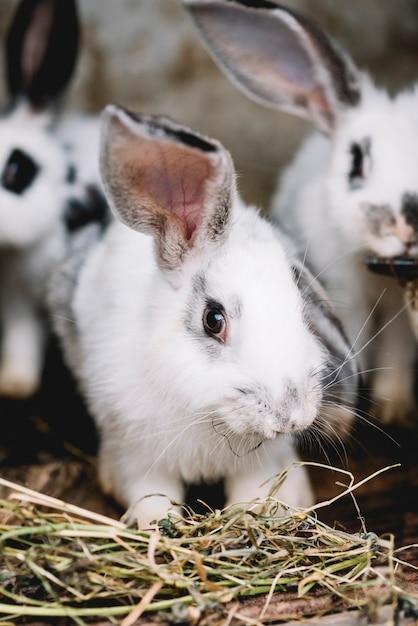Portrait, mignon, lapin, manger, herbe Photo gratuit