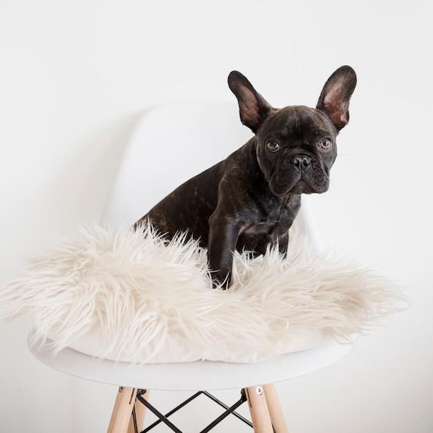 Portrait de mignon petit chien Photo gratuit