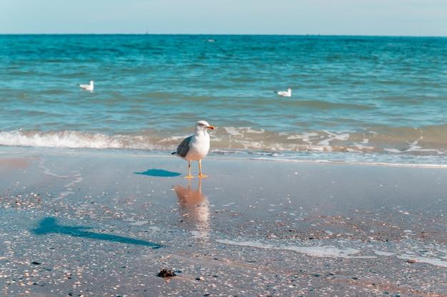 Portrait de mouette contre le bord de mer et en regardant la caméra sur une journée ensoleillée. Photo Premium