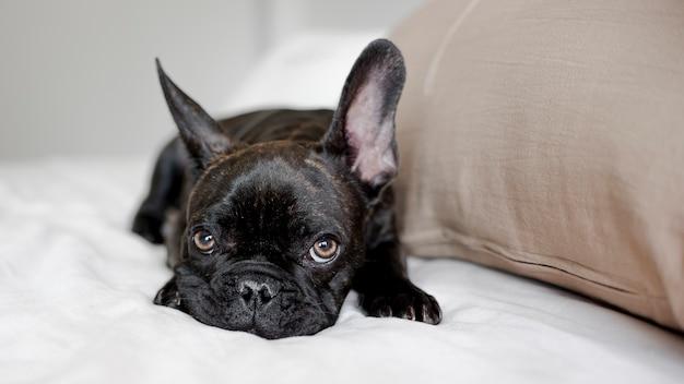 Portrait de petit chien en regardant la caméra Photo gratuit