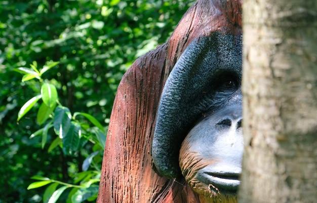 Portrait de singe en bois urangutan dans une journée ensoleillée Photo Premium