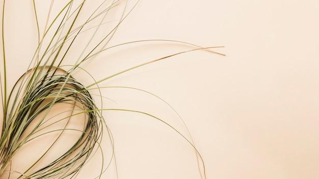 Pose Plate D'herbes Avec Fond Photo gratuit