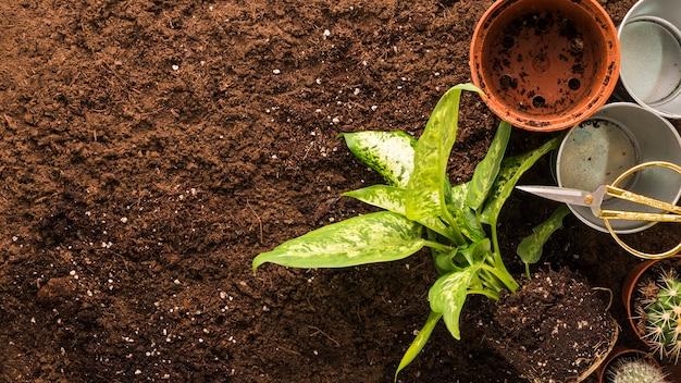 Pose plate d'outils de jardinage et de plantes avec fond Photo gratuit
