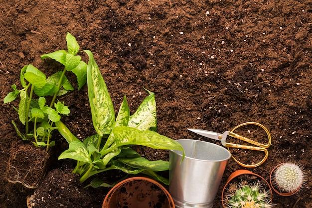 Pose plate de plantes et d'outils de jardinage avec fond Photo gratuit