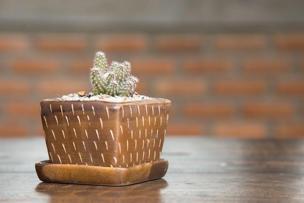 Pot de cactus mignon. petit cactus sur une table en bois dans la maison. Photo Premium
