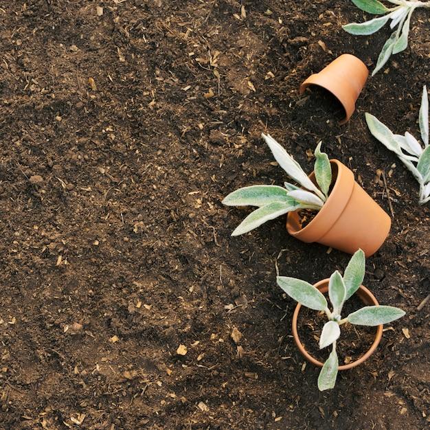 Pots de fleurs avec des plantes sur le sol Photo gratuit