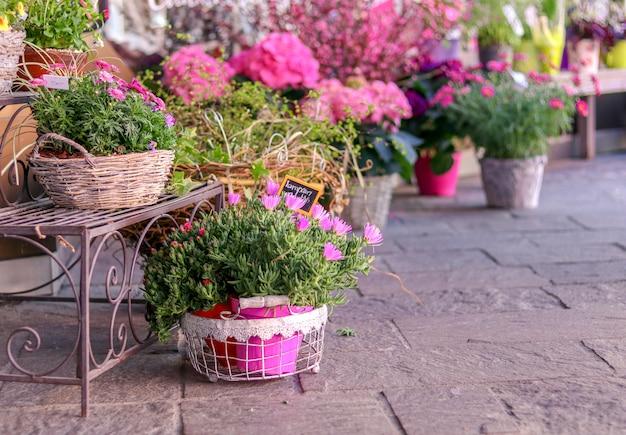 Pots de fleurs roses épanouies en vente en dehors du magasin de fleurs. Photo Premium