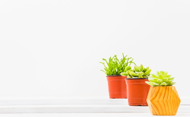 Pots avec de jolies plantes succulentes Photo gratuit