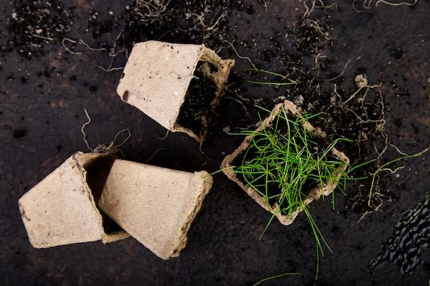 Pots de tourbe avec de jeunes plants, herbe sur brun Photo Premium