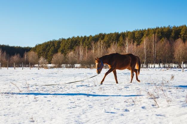 Poulain dans un champs ensoleillés d'hiver Photo Premium