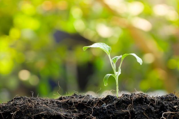 Pousse verte de plus en plus de la graine dans un sol organique Photo Premium