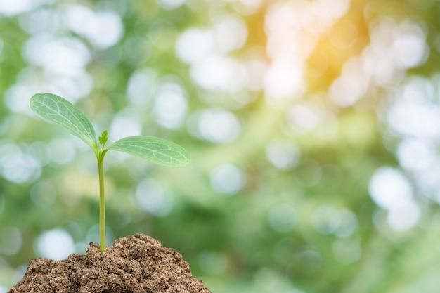 Pousse verte de plus en plus, jeune plante du sol avec la lumière du soleil et vert flou fond de nature Photo Premium