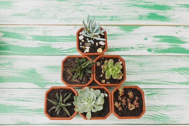 Pousses succulentes sur bois vert Photo Premium