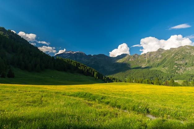 Prairie alpine fleurissant et chaîne de montagnes d'altitude verte boisée luxuriante au coucher du soleil Photo Premium