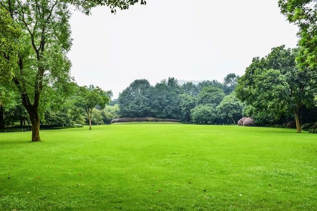 Prairie verte avec des arbres à feuilles Photo gratuit
