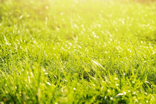 Prairie verte luxuriante verte en forêt Photo gratuit