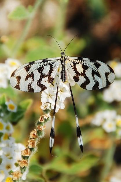 Près insecte papillon d'été modèle   Télécharger des ...