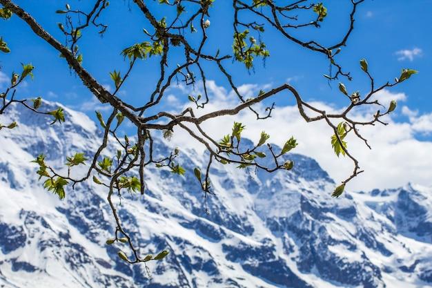 Printemps dans les alpes Photo Premium