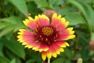 Printemps Fleur Qui Pousse Telecharger Des Photos Gratuitement