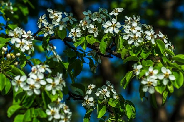 Printemps fond de fleurs de cerisier et de brindilles de bois Photo Premium