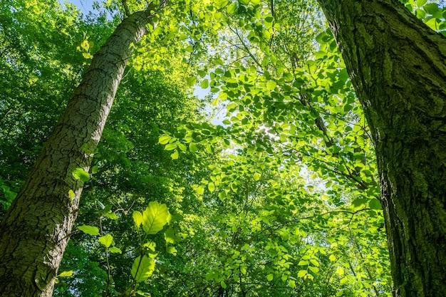 Prise De Vue En Contre-plongée De Beaux Arbres à Feuilles Vertes Sous Un Ciel Lumineux Photo gratuit