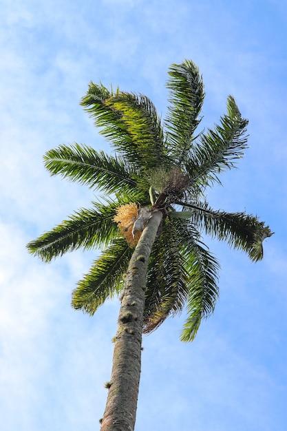 Prise De Vue En Contre-plongée Du Grand Palmier Brillant Sous Le Ciel Bleu Photo gratuit