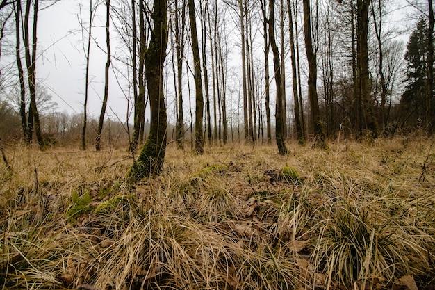 Prise De Vue En Contre-plongée D'une Forêt Effrayante Avec Une Ambiance Brumeuse Photo gratuit