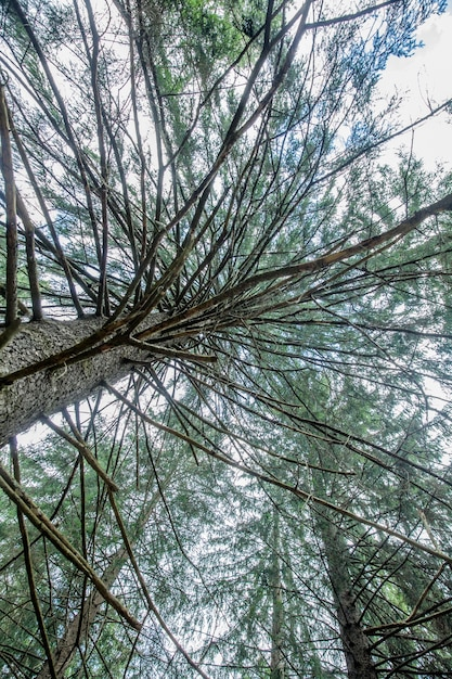 Prise De Vue En Contre-plongée D'un Grand Arbre Avec Des Branches Et Des Feuilles Vertes à La Lumière Du Jour - Parfait Pour Le Papier Peint Photo gratuit