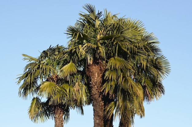 Prise De Vue à Faible Angle D'un Grand Palmier Avec Le Bleu Clair Photo gratuit