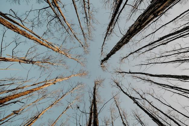 Prise De Vue à Faible Angle De Grands Arbres Nus Secs Avec Le Ciel Gris Dans Le Photo gratuit