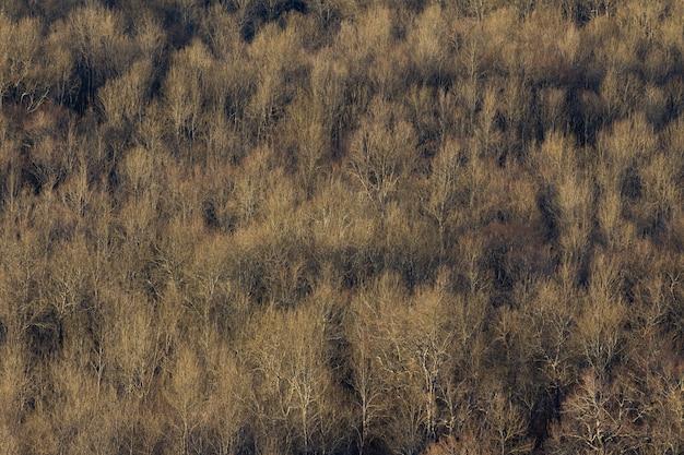 Prise De Vue En Grand Angle D'une Grande Forêt D'arbres Secs En Istrie, Croatie Photo gratuit