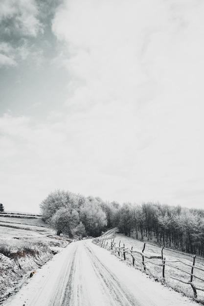 Prise De Vue à Grand Angle Vertical D'une Route Enneigée Menant à La Forêt Photo gratuit