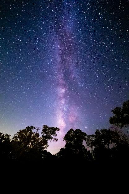 Prise De Vue Verticale D'une Forêt Sous Un Beau Ciel étoilé - Idéal Pour Les Papiers Peints Photo gratuit