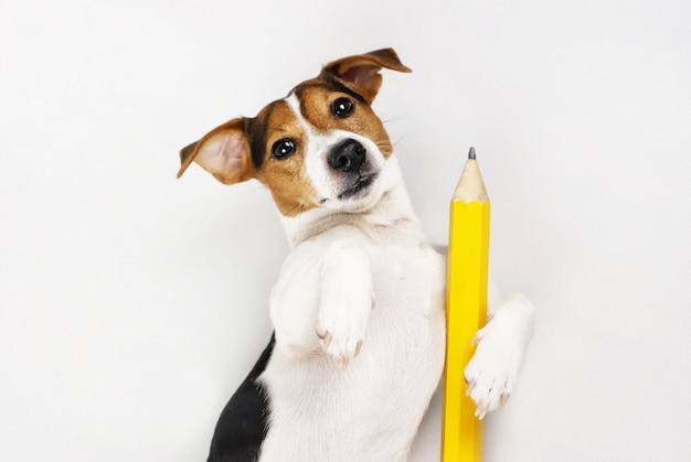 Professeur de chien Photo Premium