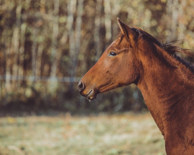 Promenade à cheval Photo gratuit