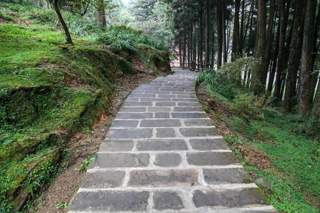 La promenade dans le parc national alishan à taiwan. Photo Premium